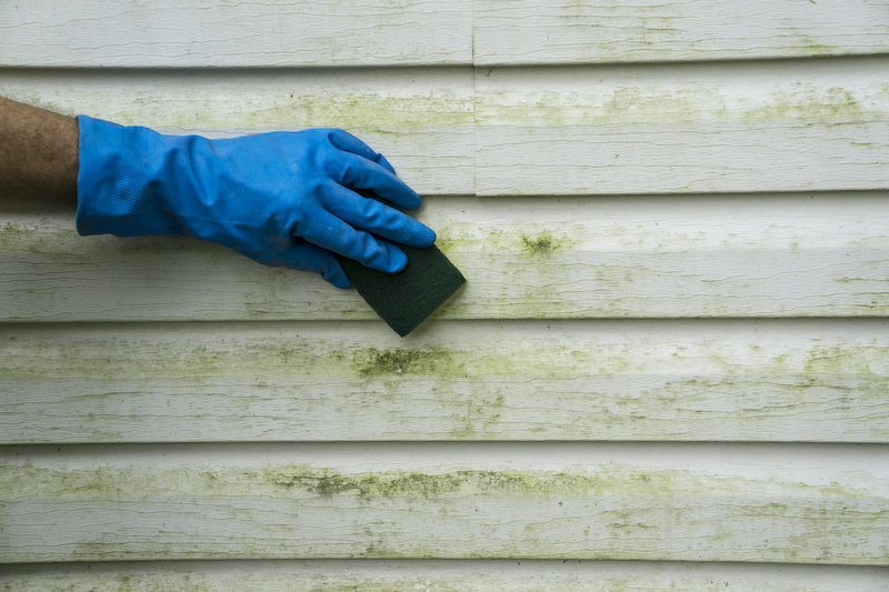 A close-up picture of a hand scrubing off mold from their house siding